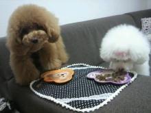 愛犬鈴ちゃん~トイプードル☆ライフスタイル~-2012062414110000.jpg