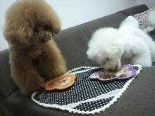 愛犬鈴ちゃん~トイプードル☆ライフスタイル~-2012062414110002.jpg