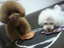 愛犬鈴ちゃん~トイプードル☆ライフスタイル~-2012062414110003.jpg