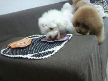 愛犬鈴ちゃん~トイプードル☆ライフスタイル~-2012062414120001.jpg