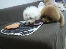 愛犬鈴ちゃん~トイプードル☆ライフスタイル~-2012062414120002.jpg