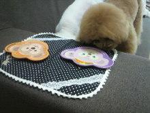 愛犬鈴ちゃん~トイプードル☆ライフスタイル~-2012062414130000.jpg
