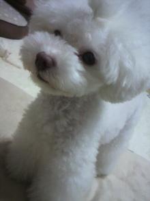 愛犬鈴ちゃん~トイプードル☆ライフスタイル~-2012062419410000.jpg
