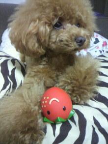 愛犬鈴ちゃん~トイプードル☆ライフスタイル~-2012062419390001.jpg