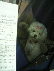 愛犬鈴ちゃん~トイプードル☆ライフスタイル~-2012062511050000.jpg