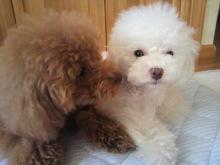 愛犬鈴ちゃん~トイプードル☆ライフスタイル~-2012062617550001.jpg