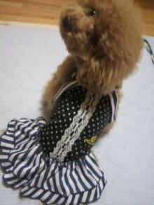 愛犬鈴ちゃん~トイプードル☆ライフスタイル~-2012062621270000.jpg