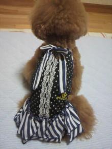 愛犬鈴ちゃん~トイプードル☆ライフスタイル~-2012062621280001.jpg