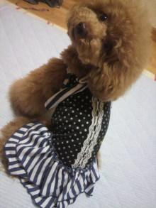愛犬鈴ちゃん~トイプードル☆ライフスタイル~-2012062621310000.jpg