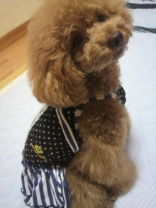 愛犬鈴ちゃん~トイプードル☆ライフスタイル~-2012062621310002.jpg