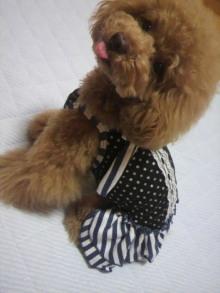 愛犬鈴ちゃん~トイプードル☆ライフスタイル~-2012062621300000.jpg
