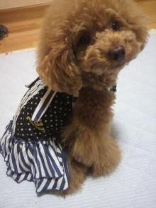 愛犬鈴ちゃん~トイプードル☆ライフスタイル~-2012062621290000.jpg