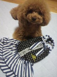 愛犬鈴ちゃん~トイプードル☆ライフスタイル~-2012062621330000.jpg