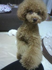 愛犬鈴ちゃん~トイプードル☆ライフスタイル~-2012062719570001.jpg