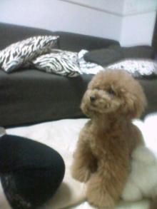 愛犬鈴ちゃん~トイプードル☆ライフスタイル~-2012062720010000.jpg