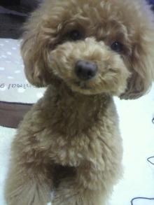 愛犬鈴ちゃん~トイプードル☆ライフスタイル~-2012062719580001.jpg