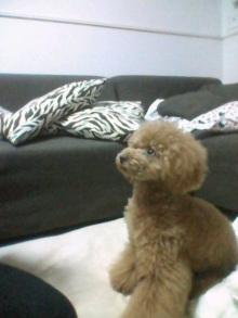 愛犬鈴ちゃん~トイプードル☆ライフスタイル~-2012062720010001.jpg