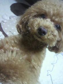 愛犬鈴ちゃん~トイプードル☆ライフスタイル~-2012062719570000.jpg