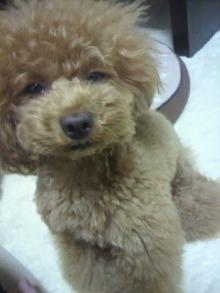 愛犬鈴ちゃん~トイプードル☆ライフスタイル~-2012062719590001.jpg