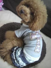 愛犬鈴ちゃん~トイプードル☆ライフスタイル~-2012062811210000.jpg