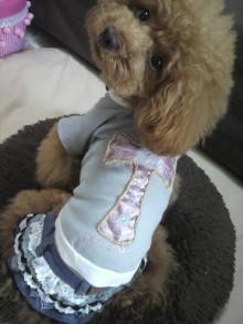 愛犬鈴ちゃん~トイプードル☆ライフスタイル~-2012062811220000.jpg