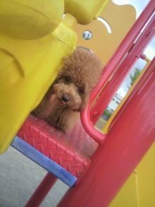 愛犬鈴ちゃん~トイプードル☆ライフスタイル~-2012062815400000.jpg