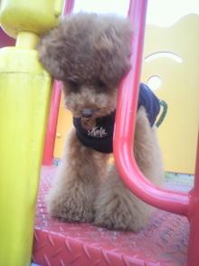 愛犬鈴ちゃん~トイプードル☆ライフスタイル~-2012062815420000.jpg