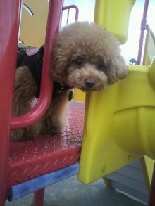 愛犬鈴ちゃん~トイプードル☆ライフスタイル~-2012062815410001.jpg