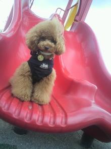 愛犬鈴ちゃん~トイプードル☆ライフスタイル~-2012062815430000.jpg