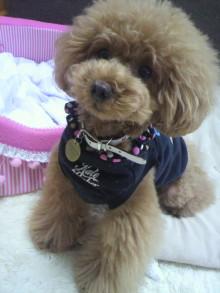 愛犬鈴ちゃん~トイプードル☆ライフスタイル~-2012062911390000.jpg