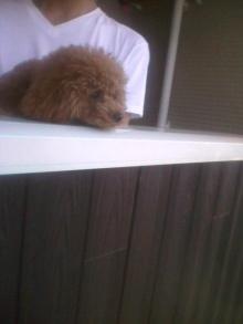 愛犬鈴ちゃん~トイプードル☆ライフスタイル~-2012063009190001.jpg