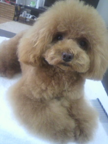 愛犬鈴ちゃん~トイプードル☆ライフスタイル~-2012070215150001.jpg