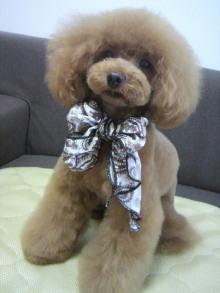 愛犬鈴ちゃん~トイプードル☆ライフスタイル~-2012070216430001.jpg