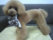 愛犬鈴ちゃん~トイプードル☆ライフスタイル~-2012070216420001.jpg