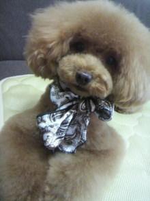 愛犬鈴ちゃん~トイプードル☆ライフスタイル~-2012070216370000.jpg