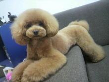 愛犬鈴ちゃん~トイプードル☆ライフスタイル~-2012070216510000.jpg