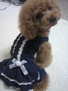 愛犬鈴ちゃん~トイプードル☆ライフスタイル~-2012070210470000.jpg