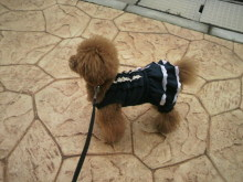 愛犬鈴ちゃん~トイプードル☆ライフスタイル~-2012070210500000.jpg