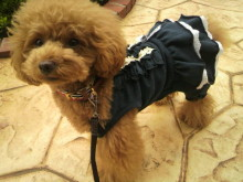 愛犬鈴ちゃん~トイプードル☆ライフスタイル~-2012070210510000.jpg