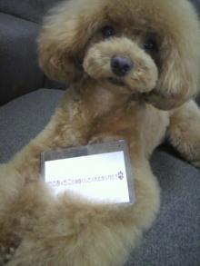 愛犬鈴ちゃん~トイプードル☆ライフスタイル~-2012070217080000.jpg