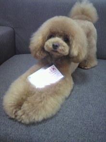 愛犬鈴ちゃん~トイプードル☆ライフスタイル~-2012070217090000.jpg