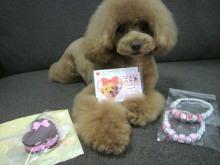 愛犬鈴ちゃん~トイプードル☆ライフスタイル~-2012070217070000.jpg
