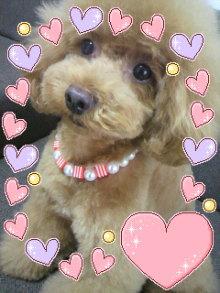 愛犬鈴ちゃん~トイプードル☆ライフスタイル~-2012070217100000.jpg