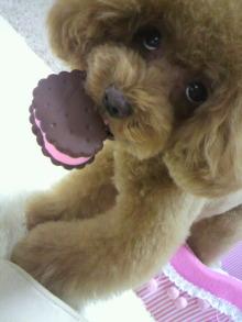 愛犬鈴ちゃん~トイプードル☆ライフスタイル~-2012070217140000.jpg