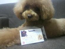 愛犬鈴ちゃん~トイプードル☆ライフスタイル~-2012070219020001.jpg