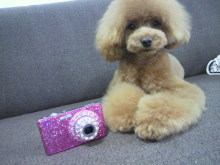 愛犬鈴ちゃん~トイプードル☆ライフスタイル~-2012070217040002.jpg