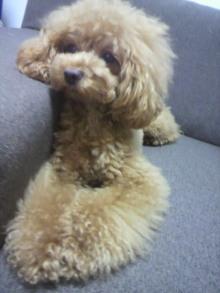 愛犬鈴ちゃん~トイプードル☆ライフスタイル~-2012071318160000.jpg