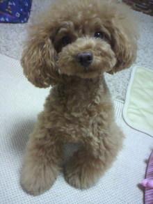 愛犬鈴ちゃん~トイプードル☆ライフスタイル~-2012071318210001.jpg