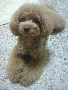 愛犬鈴ちゃん~トイプードル☆ライフスタイル~-2012071318260001.jpg