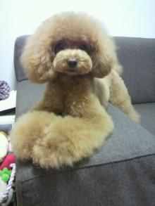 愛犬鈴ちゃん~トイプードル☆ライフスタイル~-2012071319260002.jpg